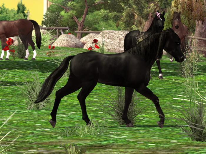 horse downloadable games